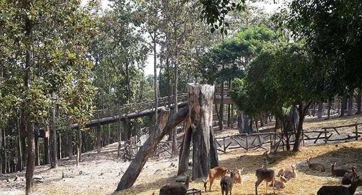 باغ وحش چیانگ مای