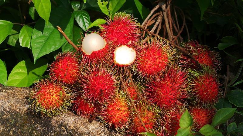 میوه های عجیب تور تایلند