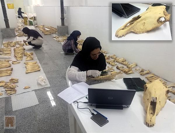 اسب های قوی هیکل دوره ساسانی ایران، نیاکان اسب های اروپا و آسیای مرکزی