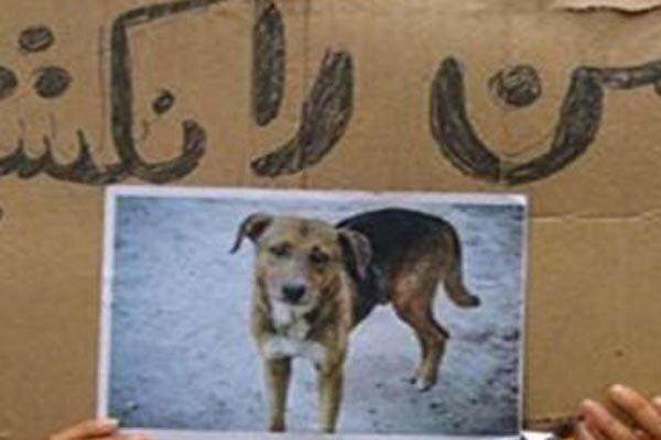 سگ کشی در دزفول و اعتراض دوستداران حیوانات