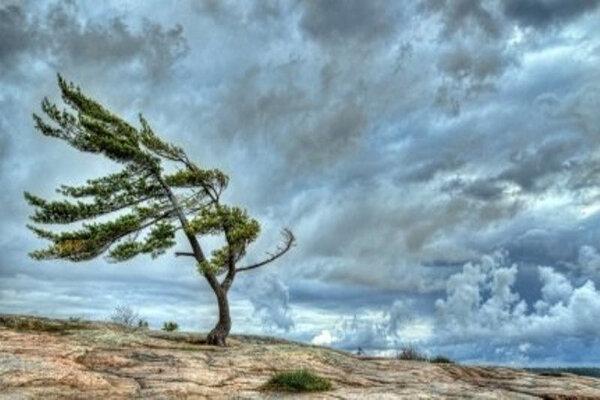 هواشناسی، در 6 استان کشور باران پیش بینی می گردد