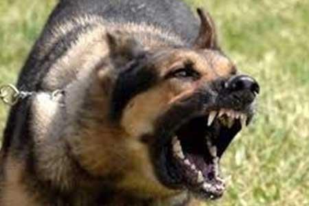 حمله سگ های نگهبان به اراذل و اوباش فراری!