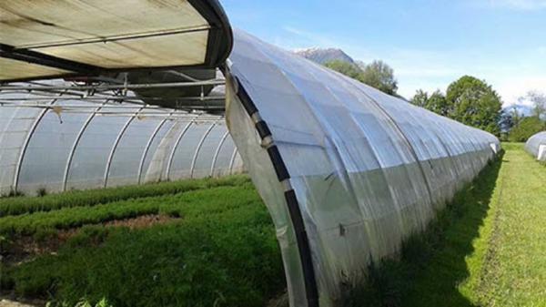 81 واحد گلخانه فعال در باغملک وجود دارد