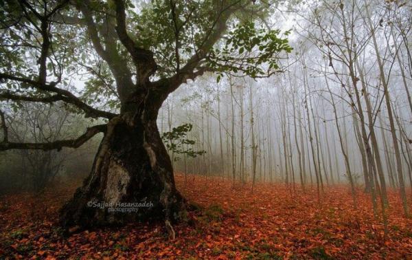 گشتی در جنگل دالخالی رامسر، طبیعت مه آلود شمال کشور