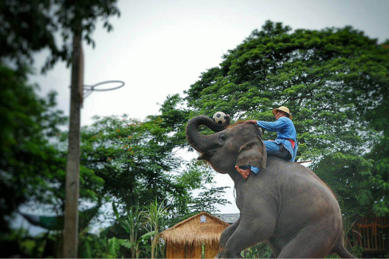 دهکده فیل ها در پاتایا